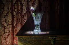 Zbliżenie więdnący, suszący róża płatki na czerni i Zdjęcia Royalty Free