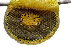 Zbliżenie widok pracujące pszczoły na honeycomb, Miodowy komórki patte zdjęcia stock
