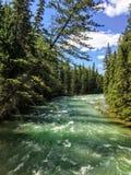 Zbliżenie widok turkusowe wody otaczać obok Athabasca rzeka evergeen las, wzdłuż Maligne jaru śladu w jaspisie obraz royalty free