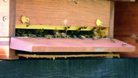 Zbliżenie widok wiele pszczoły lata wokoło ula