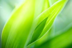 Zbliżenie widok zielony liścia tło obrazy stock