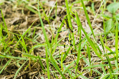 Zbliżenie wielki kolor żółty i czarny ogrodowy pająk Zdjęcia Royalty Free