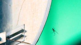 Zbliżenie wielki ogrodowy pająk Zdjęcia Stock