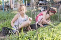 Zbliżenie wizerunek dwa nastoletniej dziewczyny odchwaszcza ogrodowego łóżko Żeńska ogrodnictwa pielenia świrzepa Zasadza trawy W Zdjęcia Stock