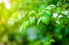 Zbliżenie wody kropla na zielonym liściu fotografia stock