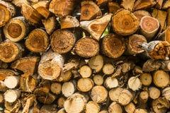 Zbliżenie wzór tnąca drewniana sterta dla tła use Zdjęcie Royalty Free
