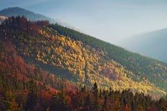 Zbliżenie wzgórza dymiący pasmo górskie zakrywający w białej mgle Zdjęcie Stock