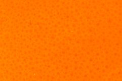 zbliżenie z skórki pomarańczowej Zdjęcie Stock