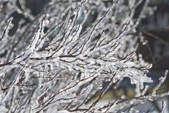 Zbliżenie zakrywający w lodzie gałąź Obraz Royalty Free