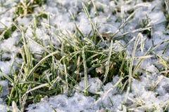 Zbliżenie zamarznięci kryształy na traw ostrzach z śniegiem Fotografia Royalty Free