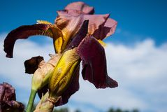 zbliżenie zatarci purpurowi kwiaty obrazy royalty free