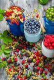 Zbliżenie zbierać świeże dzikie jagody Obrazy Royalty Free