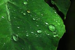 Zbliżenie Zielenieć liść z kropelką woda Obrazy Stock