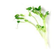 Zbliżenie zielonego grochu flanca na białym tle Zdjęcie Stock