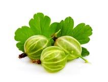 Zbliżenie zielony agrest z liściem odizolowywającym Fotografia Royalty Free