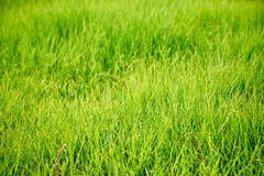 Zbliżenie zielony gazon fotografia royalty free