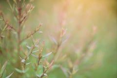 Zbliżenie zielony i czerwony liść w ogródzie Obrazy Royalty Free