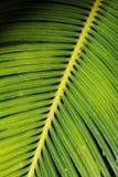 Zbliżenie zielony liść może być use tapeta Zdjęcie Stock