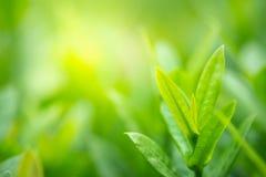 Zbliżenie zielony liść na zamazanym tle pod światłem słonecznym w selekcyjnej ostrości obrazy royalty free
