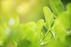 Zbliżenie zielony liść z natury tłem Zdjęcia Royalty Free