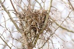 Zbliżenie zwierzęcy ptaka gniazdeczko gałązki i liście wysocy w drzewie, Fotografia Royalty Free