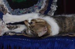 Zbliżenie zwyczajny domowy imbirowy kot uśpiony Zdjęcia Stock