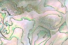 zbliżenia abalone skórki fotografia stock