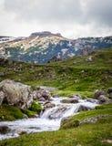 zbliżenia dandelions natury wiosna Ukraine wiosny góry krajobraz Zdjęcia Stock