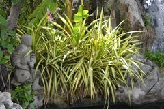 Zbliżenia drzewo na kamieniu w ogródzie Zdjęcia Royalty Free