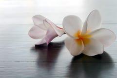 Zbliżenia Frangipani lub Plumeria Tropikalni kwiaty na drewno stole, s Zdjęcie Royalty Free