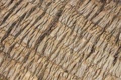 Zbliżenia kokosowego drzewa sureface Fotografia Royalty Free