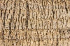 Zbliżenia kokosowego drzewa sureface tekstura Obraz Stock