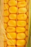 zbliżenia kolby kukurydzy Obrazy Stock