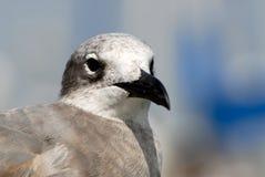 zbliżenia seagull Zdjęcia Royalty Free