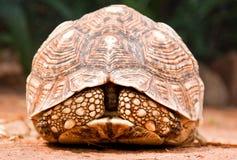 zbliżenia tortoise Obraz Royalty Free