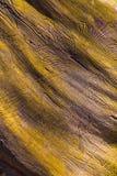 Zbliżenia wormhole w drewnianym Zdjęcia Stock