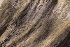 Zbliżenia wormhole w drewnianym Obrazy Stock
