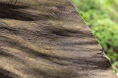 Zbliżenia wormhole w drewnianym Obrazy Royalty Free