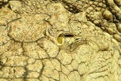 Zbliżenie aligatora oko Fotografia Stock