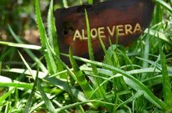 Zbliżenie aloes Vera Fotografia Royalty Free
