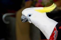 Zbliżenie bielu papuga zdjęcie stock