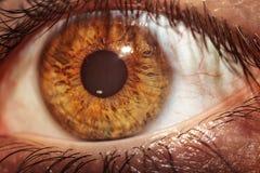 Zbliżenie brown ludzki oko Obrazy Stock