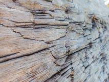 Zbliżenie drewniana tekstura, drewna gnicie Obrazy Stock