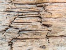 Zbliżenie drewniana tekstura, drewna gnicie Zdjęcie Royalty Free