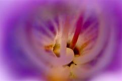 Zbliżenie inside kwiat Obrazy Royalty Free