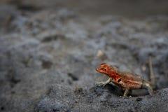 zbliżenie jaszczurka Fotografia Royalty Free