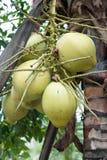 Zbliżenie kokosowy drzewo Obrazy Royalty Free