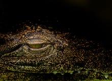 zbliżenie krokodyl Zdjęcia Stock