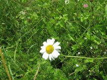 Zbliżenie kwiat w trawie zdjęcia stock