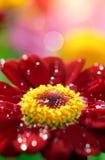 Zbliżenie kwiat z waterdrops Zdjęcia Royalty Free